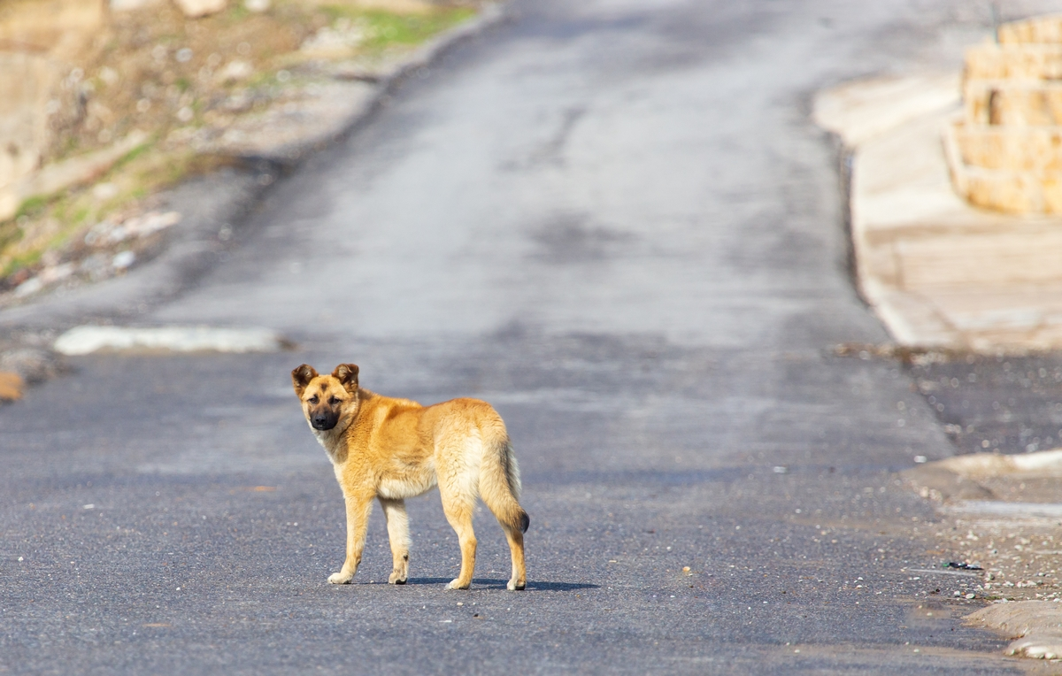 Corsa e cani randagi