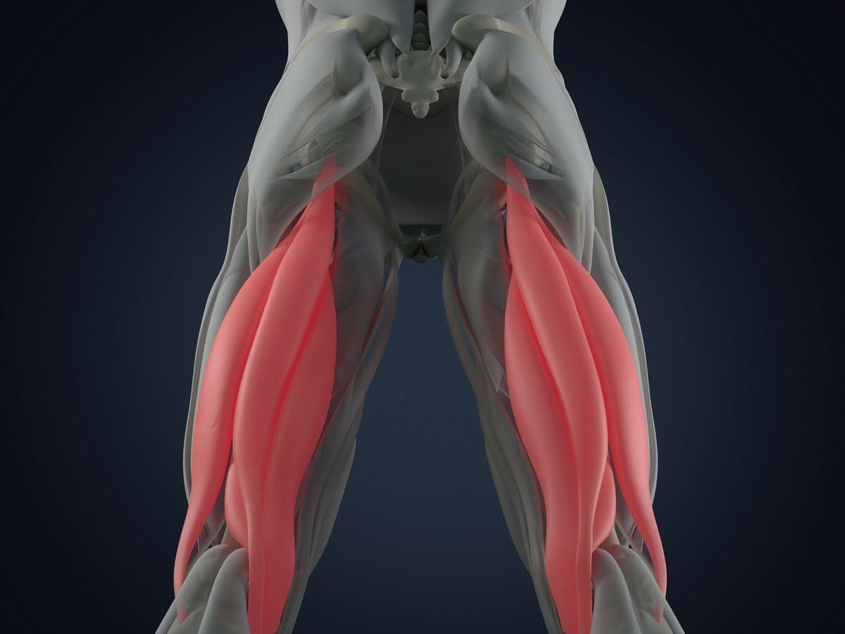Distrazione Muscoli ischiocrurali
